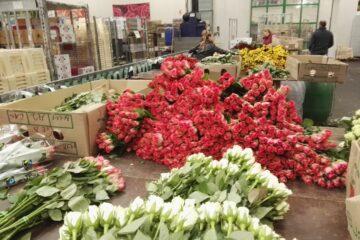 Кения розы